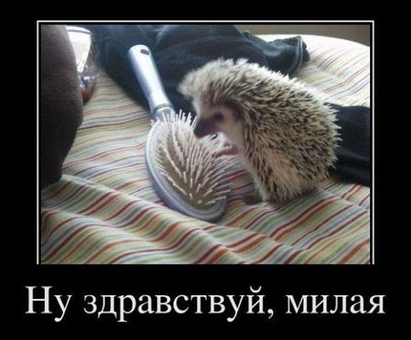 Saudação em Russa